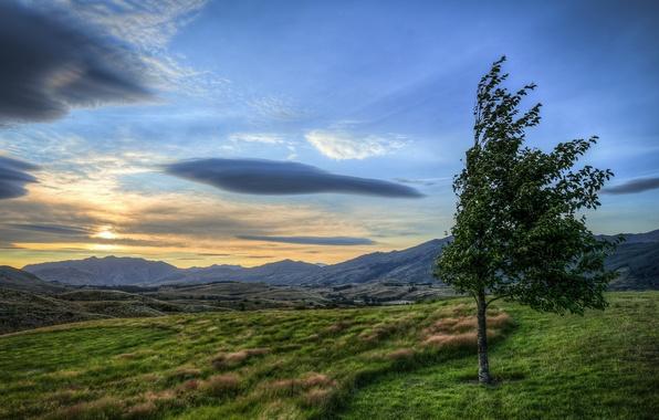 Картинка поле, пейзаж, дерево