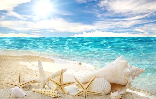 Картинка песок, море, пляж, солнце, звезды, ракушки, summer, sunshine, beach, sea, sand, seashells, starfishes