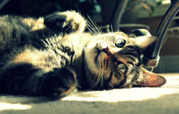 Картинка кошка, кот, солнце, свет, отдых, лежит