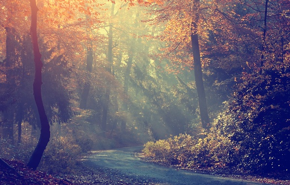 Картинка дорога, осень, лес, деревья, туман, утро