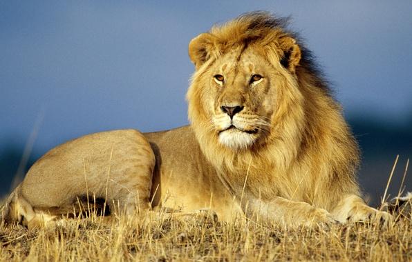 Картинки природа и животные 480 800