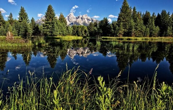 Картинка лес, горы, озеро, Wyoming, Teton National Park