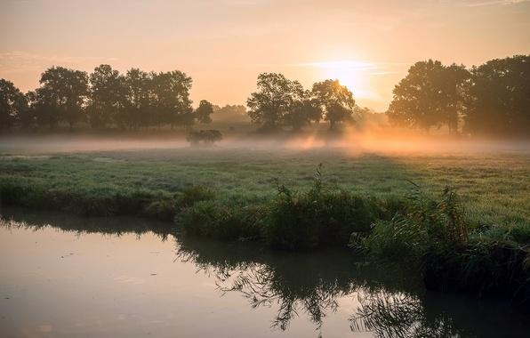 Картинка трава, солнце, лучи, свет, деревья, туман, роса, река, весна, утро, камыш, солнца