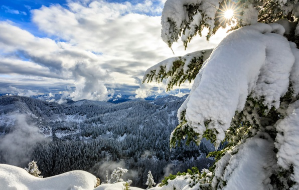 Картинка зима, лес, облака, снег, горы, ель, панорама, Washington, штат Вашингтон, Каскадные горы, Cascade Range, Okanogan-Wenatchee …