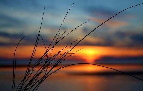 Картинка небо, трава, облака, закат, растение