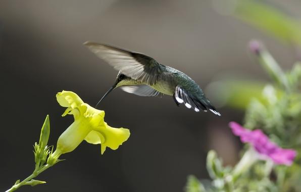 Картинка цветы, желтый, природа, нектар, розовый, птица, колибри