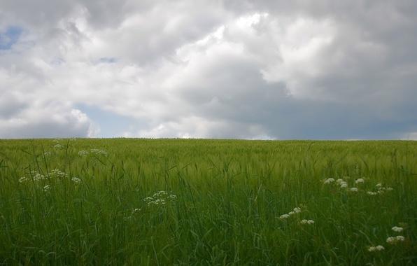Картинка облака, зеленый, Поле