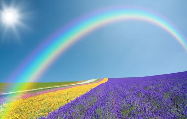 Картинка поле, фиолетовый, небо, солнце, пейзаж, цветы, желтый, природа, зеленый, фон, widescreen, обои, поля, радуга, wallpaper, …