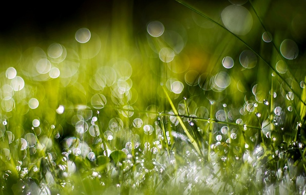 Картинка зелень, трава, вода, капли, макро, природа, роса, боке