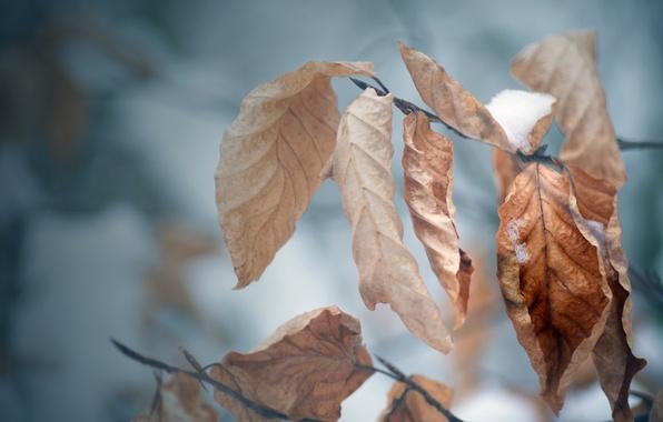 Картинка холод, зима, осень, листья, снег, дерево, настроение, ветка, мороз, макро обои, осенние обои, зимние обои