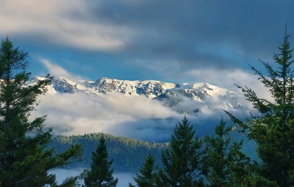 Картинка облака, горы, ели, Washington, штат Вашингтон, Olympic National Park, Olympic Mountains, Hurricane Ridge, хребет Олимпик, …