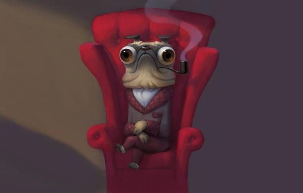 Картинка трубка, собака, кресло, курит