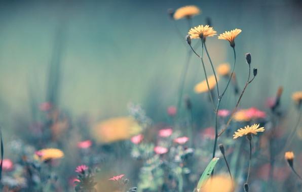 Картинка поле, лето, трава, макро, цветы, легкость, растения, желтые, размытость, розовые