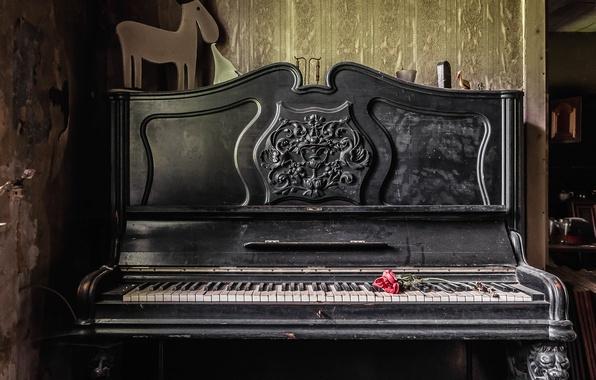 Картинка музыка, роза, пианино