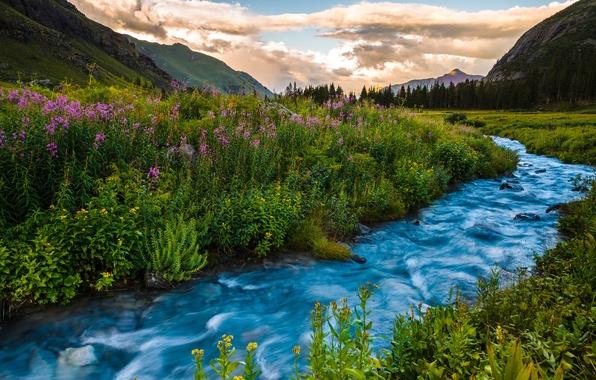 Картинка лето, пейзаж, закат, цветы, горы, река, Колорадо, США
