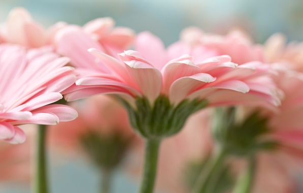 лилии сад фото