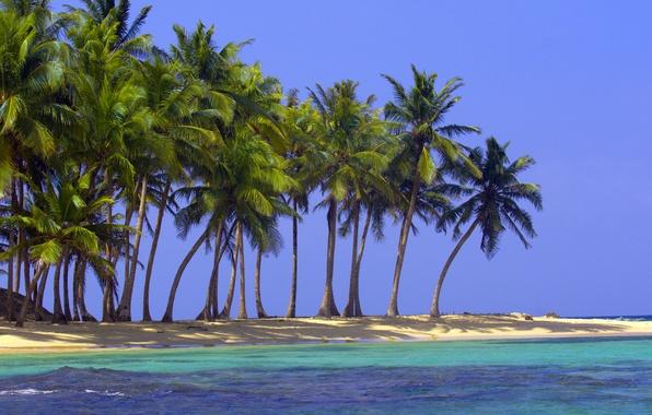 Картинка песок, море, пляж, природа, тропики, пальмы, океан