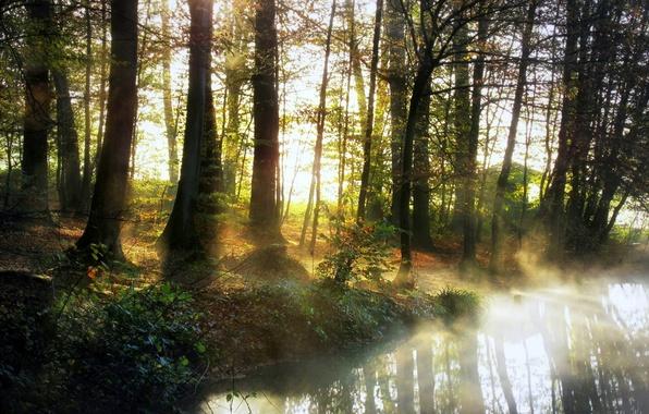 Картинка лес, природа, туман, река, утро