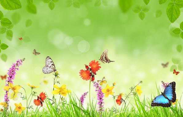 Картинка бабочки, цветы, травка, листики