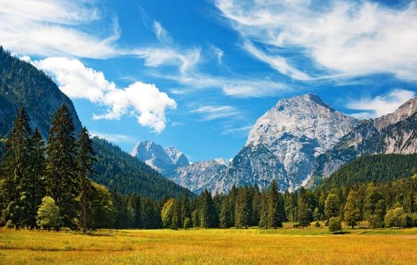 Картинка лес, небо, трава, облака, пейзаж, горы, природа, Швейцария, Альпы, луг, Switzerland, Alpes, Alpen