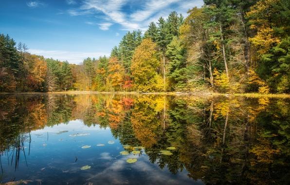 Картинка осень, лес, деревья, озеро, отражение, Connecticut, Norfolk