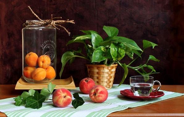 Картинка цветок, вода, чашка, банка, фрукты, натюрморт, персики, абрикосы