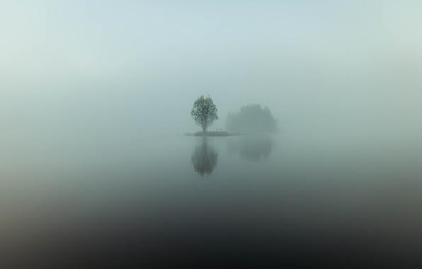 Картинка вода, отражения, туман, озеро, дерево, остров, минимализм, утро, дымка