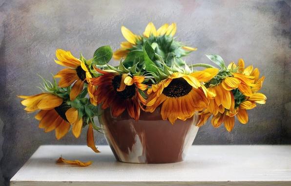 Картинка flower, nature, life, flowers, bouquet, sunflowers, still