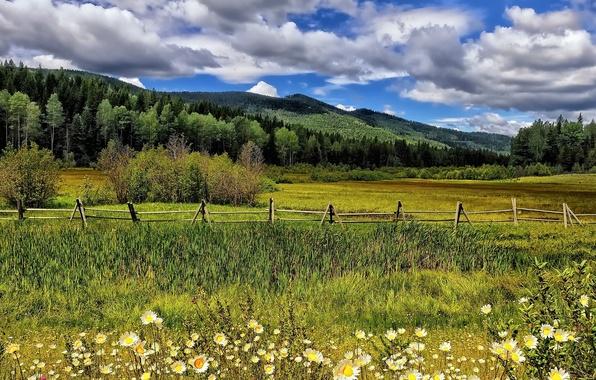 Картинка облака, деревья, цветы, горы, забор, ромашки, луг