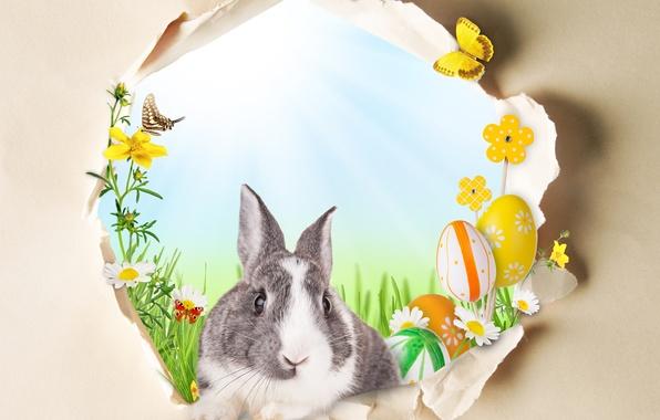 Картинка бабочки, цветы, праздник, кролик, пасха, окошко, яички