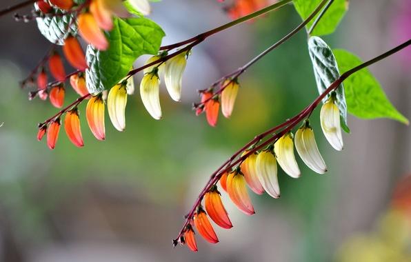 Картинка листья, макро, цветы, ветка, лепестки
