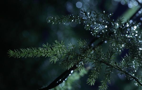 Картинка макро, природа, капли воды, веточки