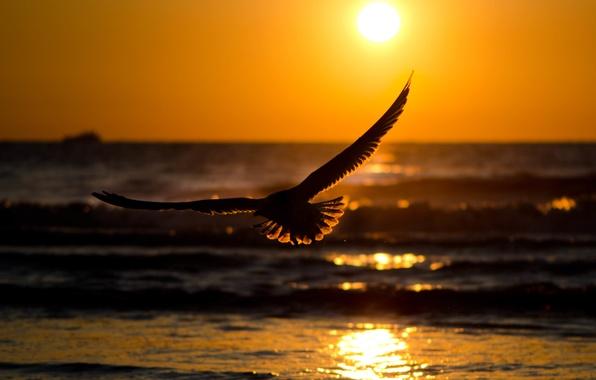 Картинка море, волны, небо, вода, солнце, закат, природа, блики, отражение, река, фон, птица, обои, спокойствие, волна, …