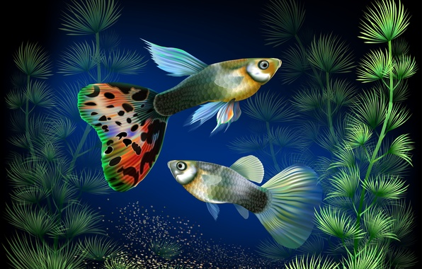 Картинка рыбки, водоросли, аквариум, вектор, под водой