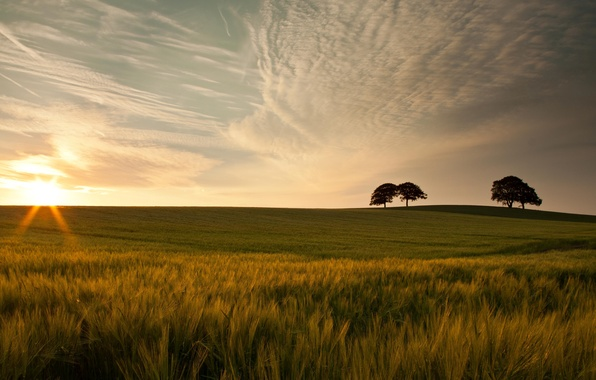 Картинка зелень, небо, трава, листья, солнце, облака, макро, деревья, природа, фон, дерево, widescreen, обои, красота, колоски, ...