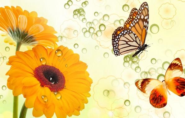 Картинка цветы, коллаж, бабочка, вектор, открытка