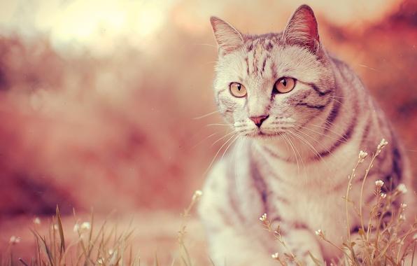 Картинка глаза, кот, усы, фото, лапы, шерсть, размытость, нос, мордочка, окрас, wallpapers, боке, bokeh