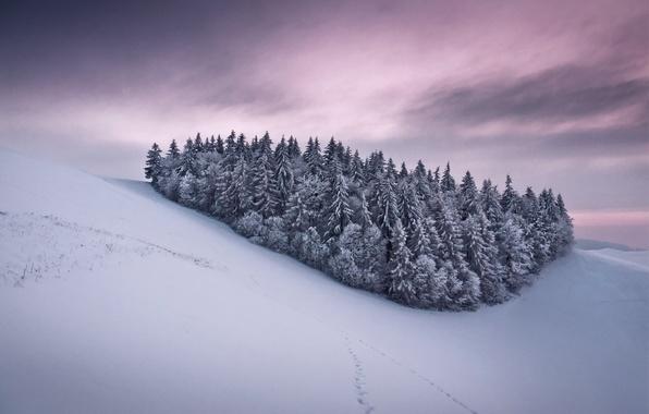 Картинка иней, небо, снег, деревья, следы, тучи, елки, Зима, склон, холм, розовое, серые