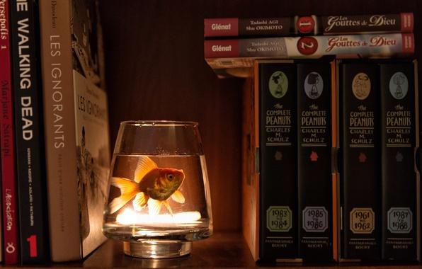 Картинка вода, стакан, книги, рыбка, шкаф