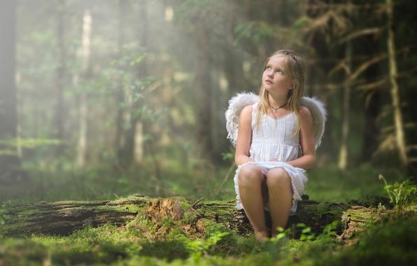 Картинка лес, крылья, ангел, девочка
