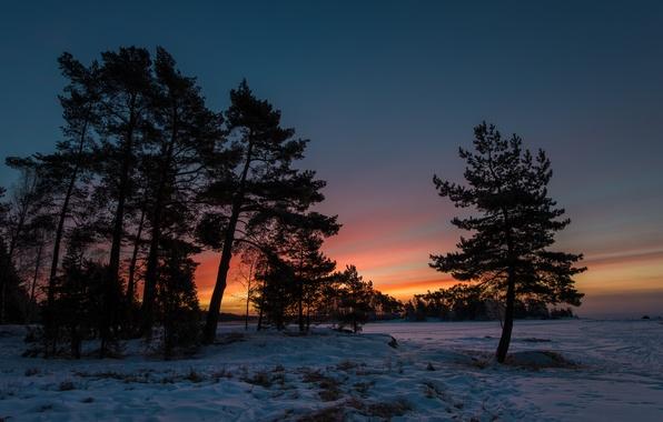 Картинка зима, снег, деревья, закат, сумерки