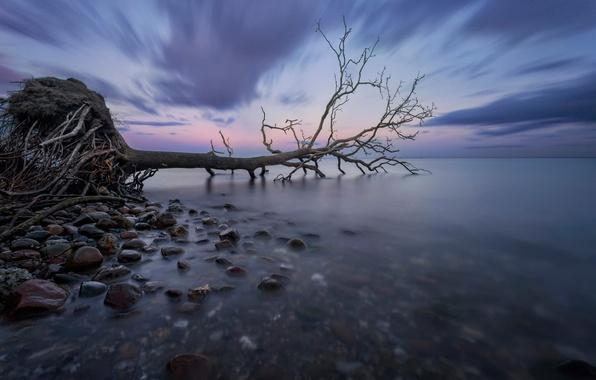Картинка море, корни, гладь, камни, дерево, выдержка, Дания, залив