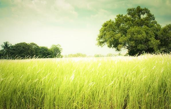 Картинка лето, трава, природа, Summer
