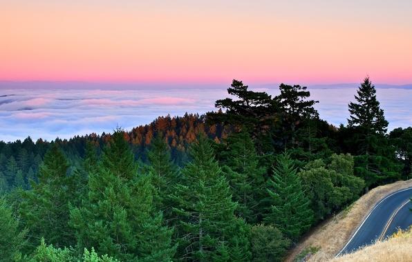 Картинка дорога, лес, облака, закат, горы, туман, океан, ели, залив, сосны, california, калифорния, тихий
