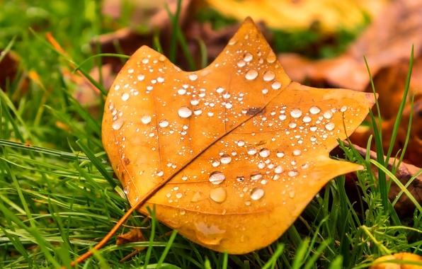 Картинка осень, трава, капли, макро, природа, лист