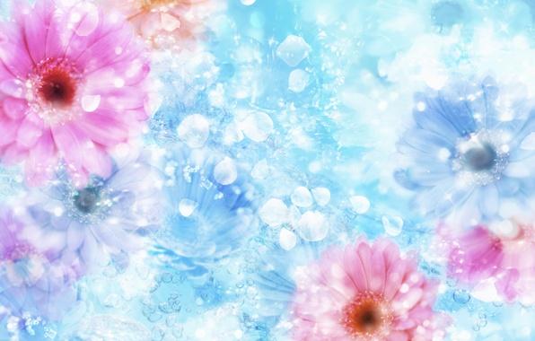 Картинка цветок, вода, отблеск