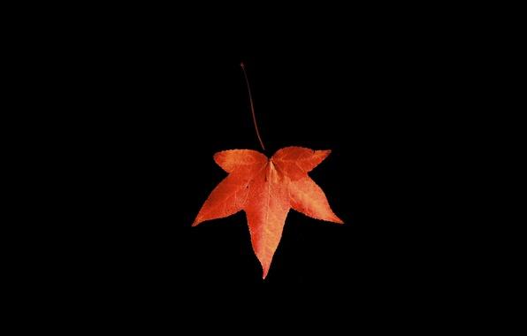 Картинка осень, макро, лист, чёрный фон