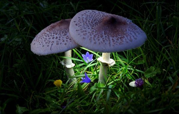 Картинка свет, цветы, грибы