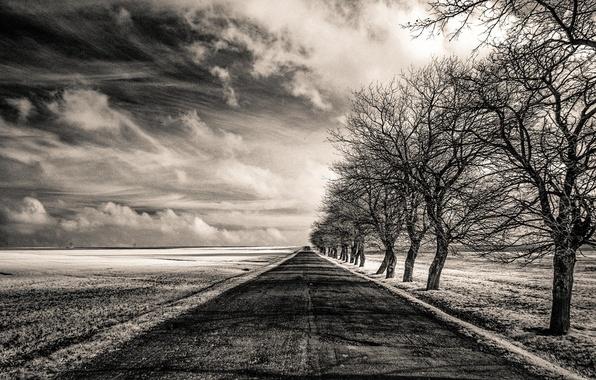 Картинка дорога, поле, деревья, Infinity, бесконечность