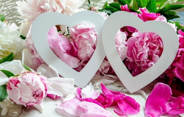 Картинка любовь, цветы, праздник, сердечки, пионы